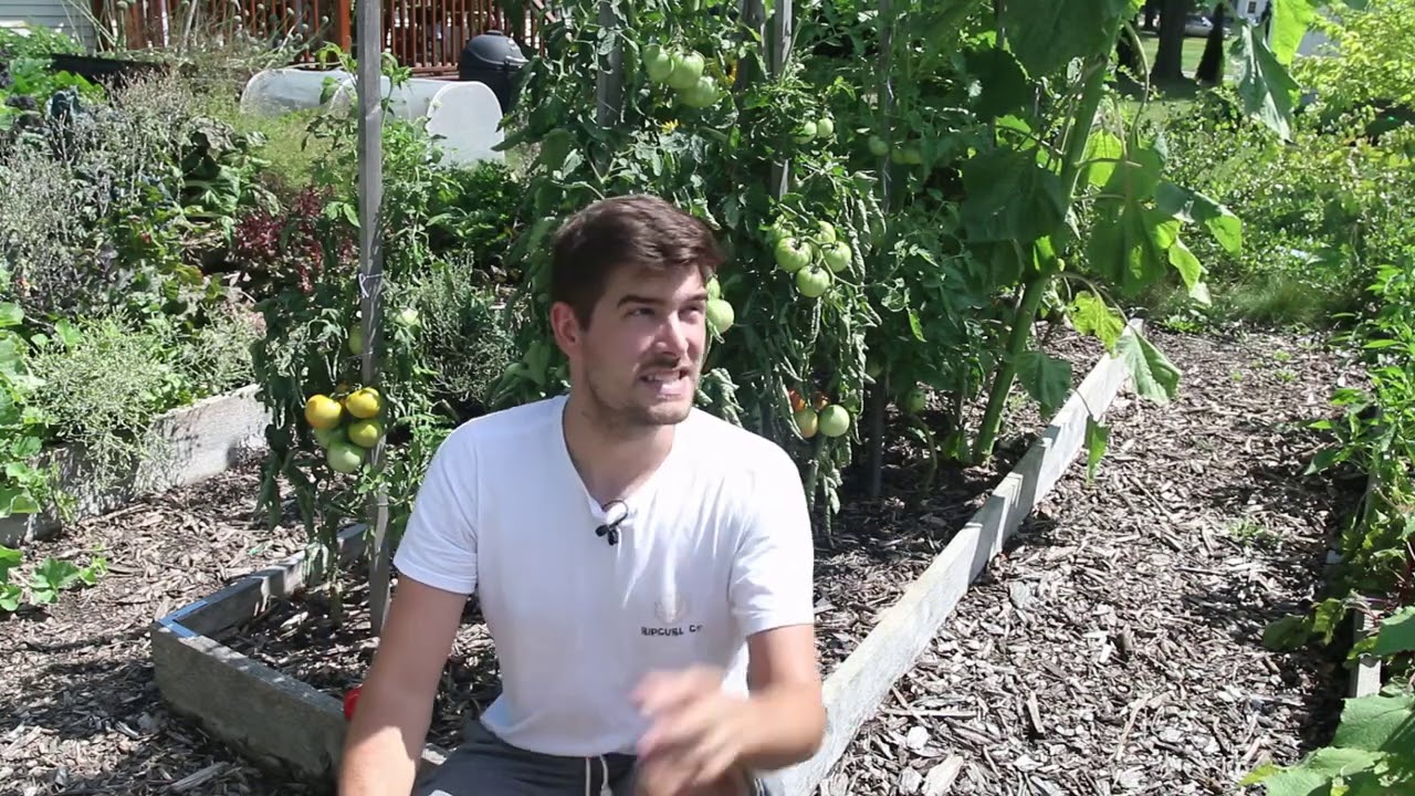 """What Causes Tomatoes to """"Catface"""" and How to Prevent It"""