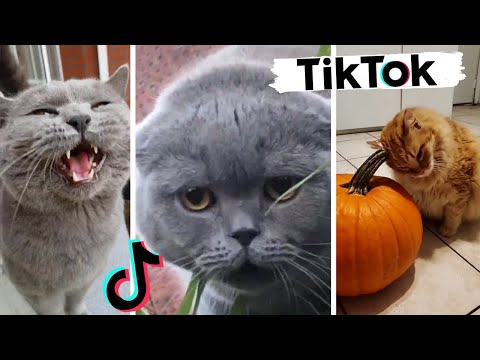 Funny Cats of TIK TOK ~ TikToks That Make You Go Awww!