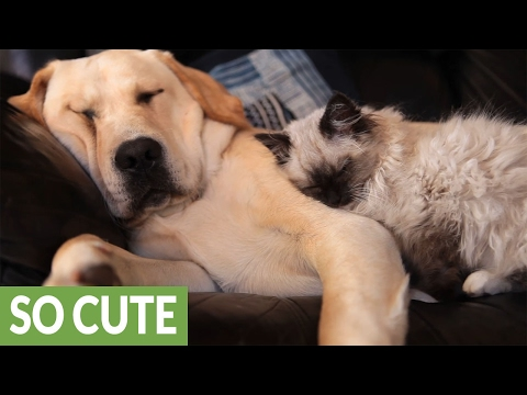 Dog and cat buddies preciously snuggle together