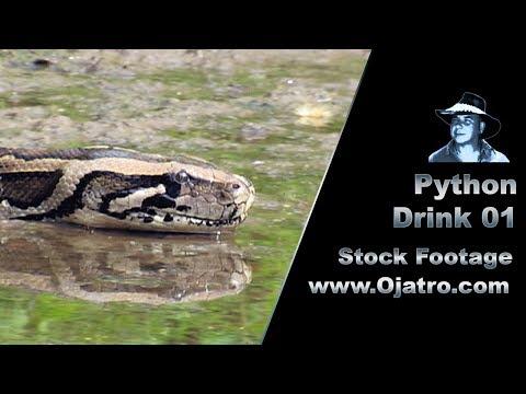 Python Drink 01 Stock Footage