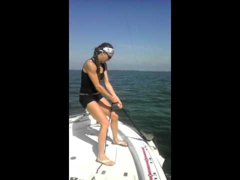 Shark Tug-O-War