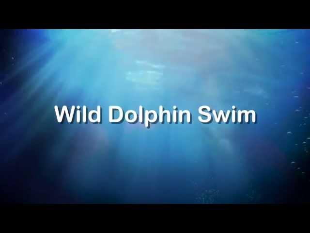 Dolphin Swim Australia. Wild Dolphin Swim