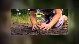 Phoenix, AZ Landscaping Services - Organic Gardening Tips