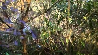 摩耶山にひそむ 廃墟[摩耶観光ホテル] thumbnail