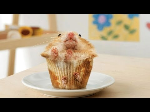 Funny Hamsters ★ Funny & Cute Hamsters [Funny Pets]