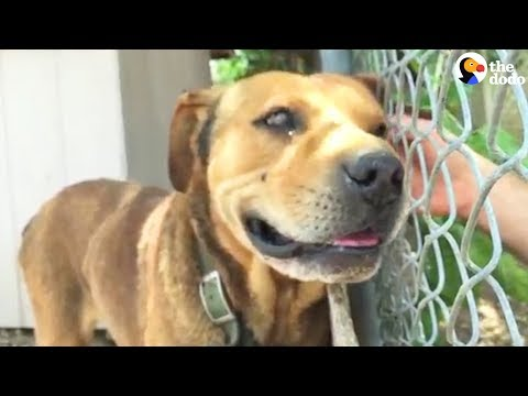 Dog Chained Up For A DECADE Saved by AMAZING Family | The Dodo