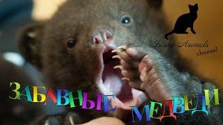 Смешные медвежата. смешные и веселые медвежата. Funny bears compilation. Funny Animals