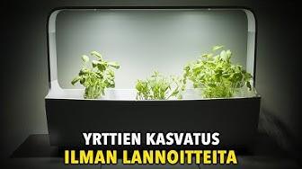 Kasvatuksen aloitus - Kaupan yrttien kasvatus Tregren-sisäpuutarhassa ilman lannoitteita, osa 1/2