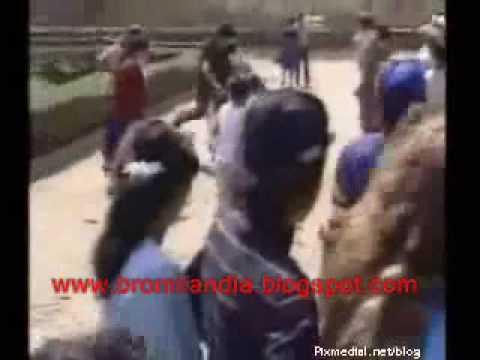 crazy animals animales locos, videos graciosos very funny jeje www bromilandia blogspot com