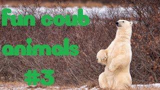 FUN coub animals #3  смешные животные приколы ноябрь 2018