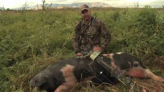 Utah Archery Pig Hunt