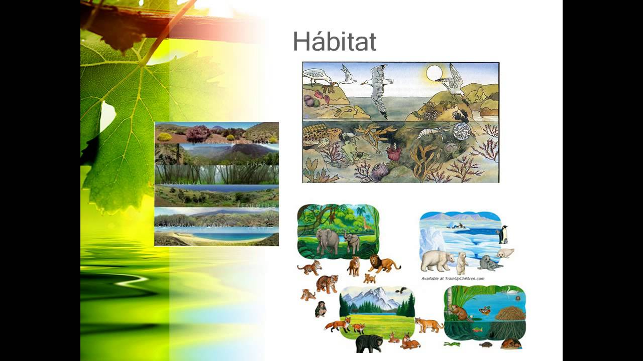Watch on Animals And Their Habitats
