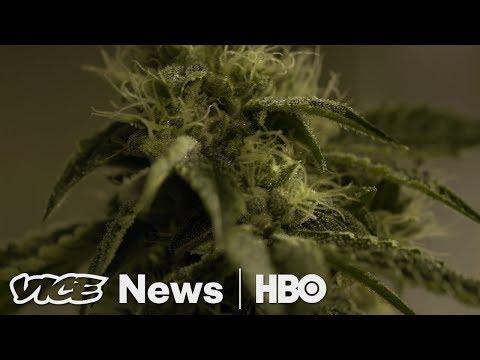 Will California Weed Growers Survive Legal Marijuana? (HBO)