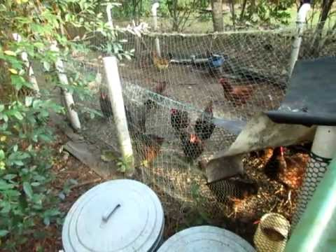 Doomsday Preppers Chicken Feed