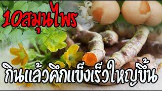 10สมุนไพรชูกำลังบำรุงกำลังของไทย ที่โด่งดังไปทั่วประเทศและทั่วโลก เจอในป่าให้รีบเก็บมาไว้เลย