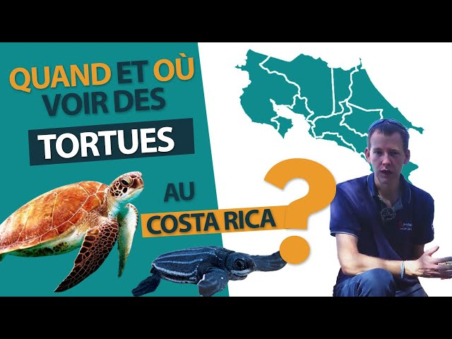 Quand et où voir des tortues pendant votre voyage au Costa Rica ?
