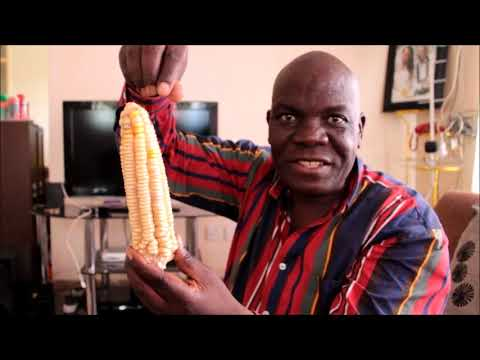 Christopher Banda on Indigenous Seeds vs. GMO-Seeds and GMO-caused Diseases