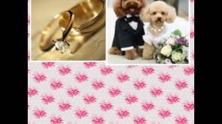 Свадебное поздравление! ( коллаж 5)