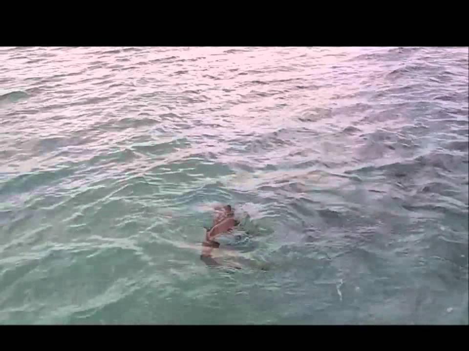 Fishing In Cuba Catching A Shark Cayo Guillermo Coco
