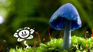 Undertale: Mushroom Dance