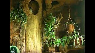 видео Зимний сад на лоджии
