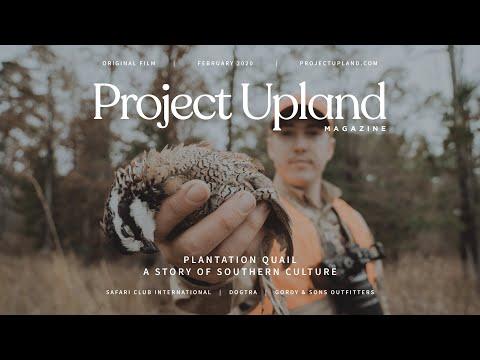 Southern Bobwhite Quail Hunting - Plantation Quail - A Project Upland Original Film