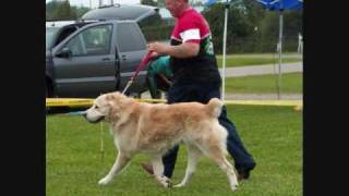 Best In Show Central Asian Shepherd Ukc Dog Show Welland Ontario Guardian Group