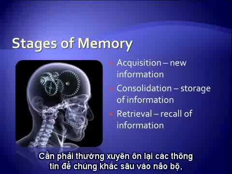Cách cải thiện trí nhớ hiệu quả