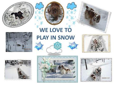 Europeheart Cavalier King Charles Spaniels - Winter Wonderland