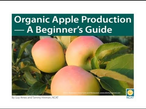 Organic Apple Production - A Beginner's Guide