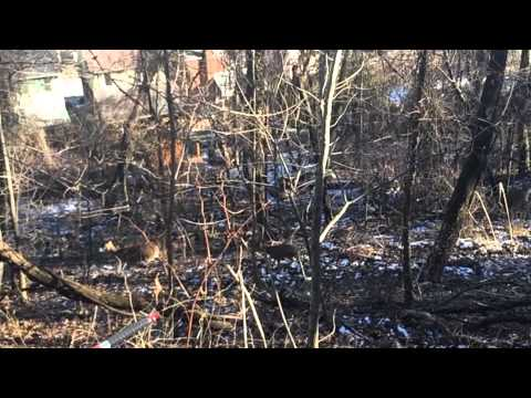 URBAN ARCHERY HUNTING | PITTSBURGH