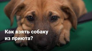 Как взять собаку из приюта в Подмосковье?