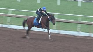 BREEDERS' CUP WORKOUT: Lookin At Lee (10/24/16)
