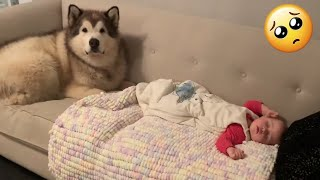 Adorable Dogs Put Baby To Sleep and Protect Her! (Cutest Video Ever!!)