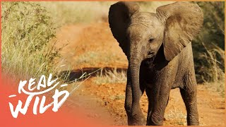 Who's Going To Save This Elephant? | Elephants On The Run | Wild Things Shorts thumbnail