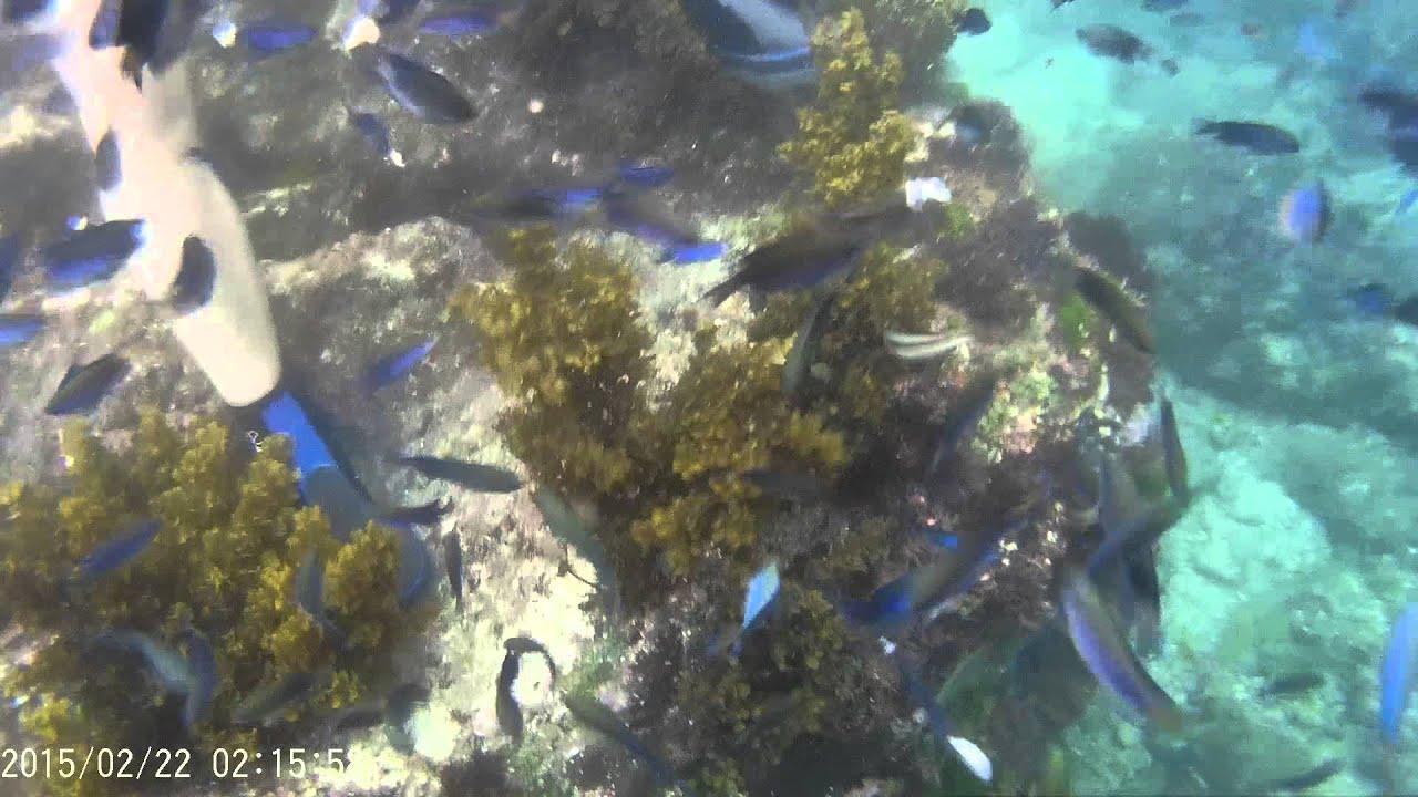 龍洞和美國小浮潛餵魚 - YouTube