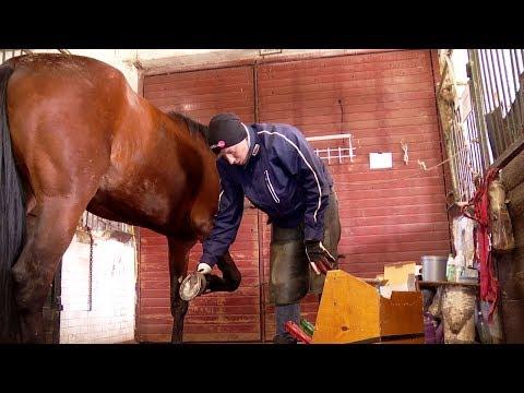 Житель Тамбова уже больше 10 лет тренирует лошадей и сам выступает в качестве наездника