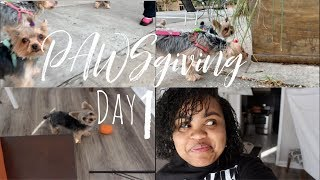 My Dog took it and Ran! | PAWSgiving Day 1