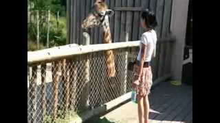 Tour Through The Cincinnati Zoo