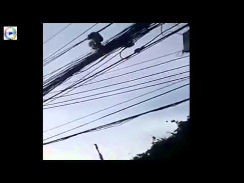 Cực sốc-Bắt rắn khủng ngủ trên đường dây điện