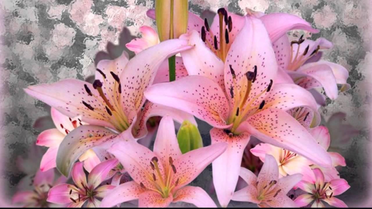 Открытки с днем рождения женщине красивые лилии цветы