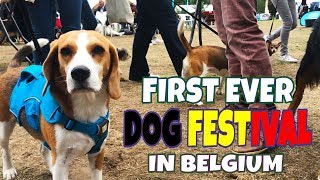 First Ever DOG FESTIVAL in Belgium : Louie and Marie The Beagles
