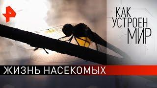 """Жизнь насекомых. """"Как устроен мир"""" с Тимофеем Баженовым (25.09.19)."""