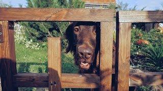 Огородный забор своими руками. Ограждение от собаки.