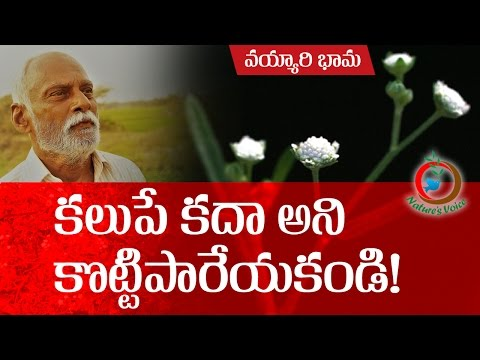Natural Farming | Beneficial aspects of Parthenium hysterophorus-వయ్యారిభామ  ఉపయోగాలు