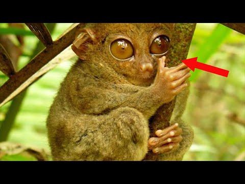 weirdest-animals-ever-discovered