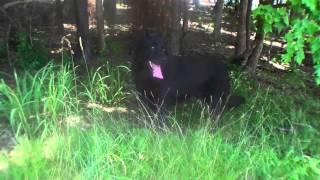 Hiking In The Heat At Jordan Dam With My German Shepherd Dog