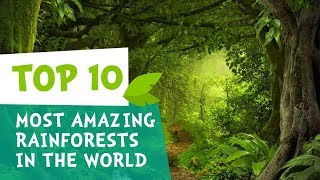 Top 10 Most Amazing Rainforests in the World