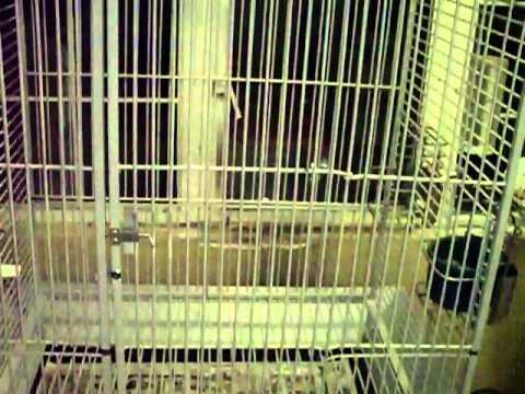 New California Cage for African Grey Congo. Part 1 of 2