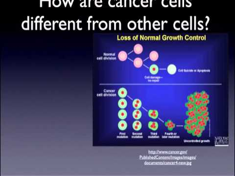 Cancer, stem cells, and the cell cycle